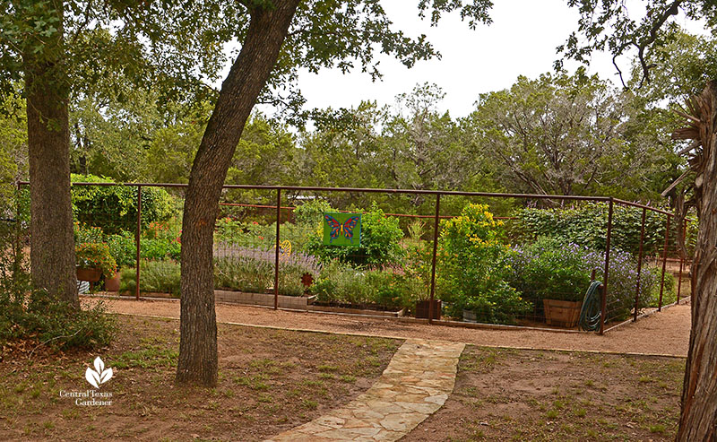 path to enclosed deer proof habitat garden Doug Green Central Texas Gardener