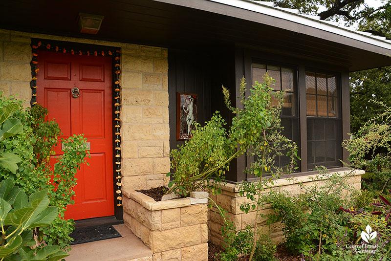 Papalo and moringa front door Meredith Thomas garden Central Texas Gardener