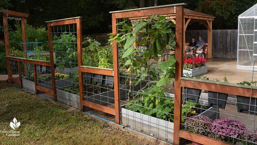 Square-Foot-Gardens-Ellen-and-Rick-Bickling-Central-Texas-Gardener-