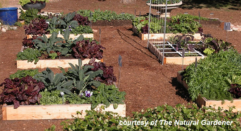 Square foot gardens The Natural Gardener Central Texas Gardener