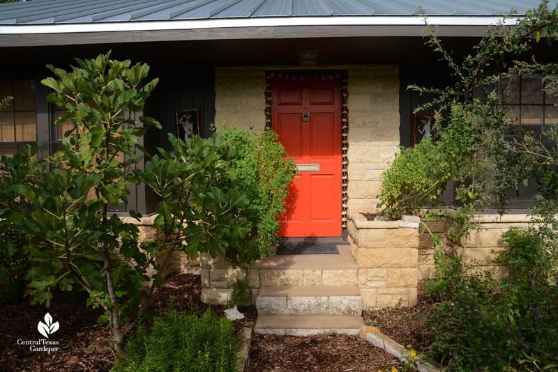 front door food papalo fig moringa Meredith Thomas Central Texas Gardener