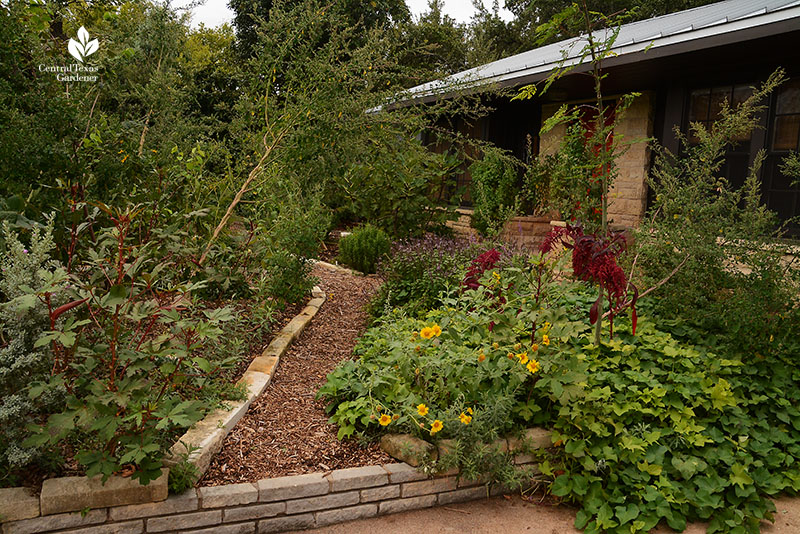 front yard mulch and limestone edge path food forest Meredith Thomas Central Texas Gardener