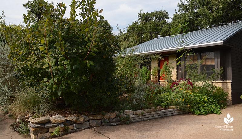 front yard orchard edible garden Meredith Thomas design Central Texas Gardener