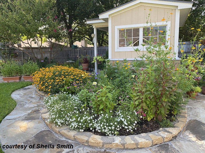 native and adapted plants for pollinators raised stone bed around shed Sheila Smith garden Central Texas Gardener