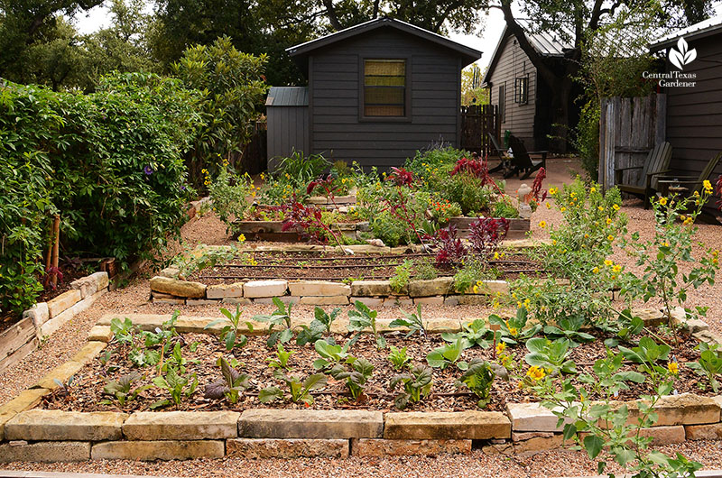 raised bed organic food ferment house Meredith Thomas Central Texas Gardener