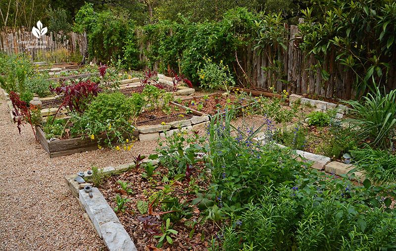 raised vegetable beds organic food passionvine loquat tree Meredith Thomas