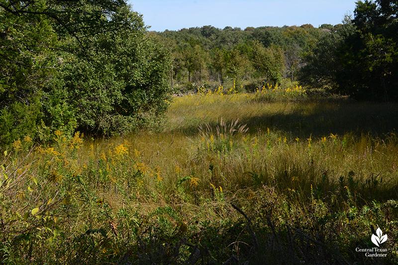 Goldenrod muhly grasses Maximillian sunflower entrance prairie Wildflower Center
