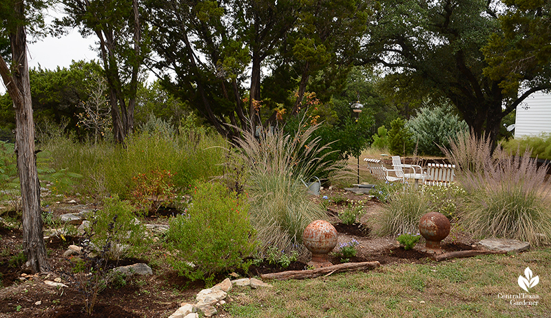 Lindheimer muhly and native perennials under mountain cedars and oak trees Julie Nelson and Kay Angermann property
