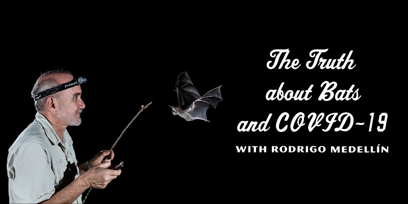 The Truth about Bats and Covid with Rodrigo Medellín Texas Butterfly Ranch