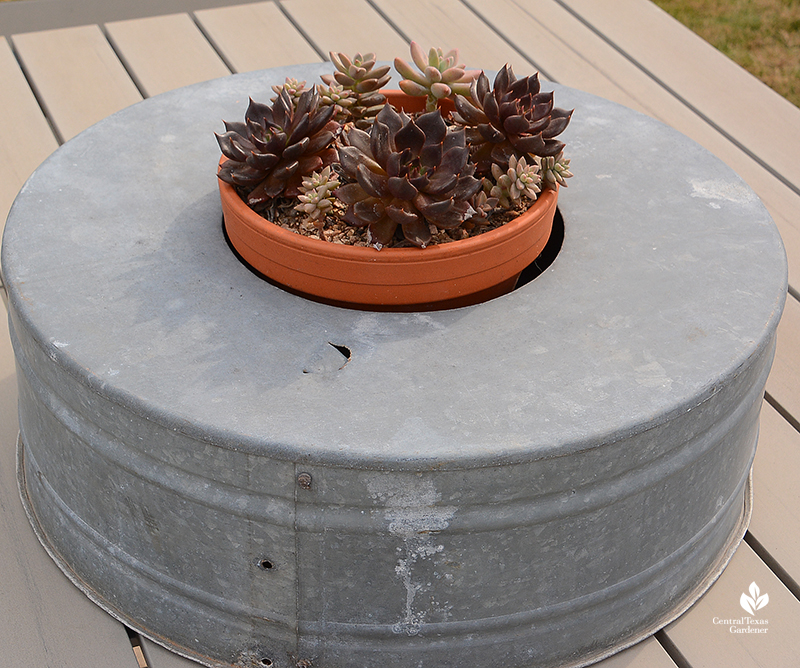 clever succulent container design with galvinized tub Julie Nelson Kay Angermann garden