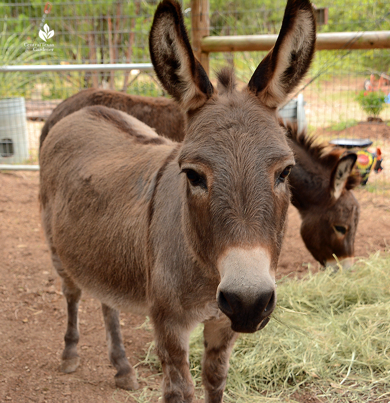 pet donkeys Julie Nelson Kay Angermann garden Katie Bird Farm
