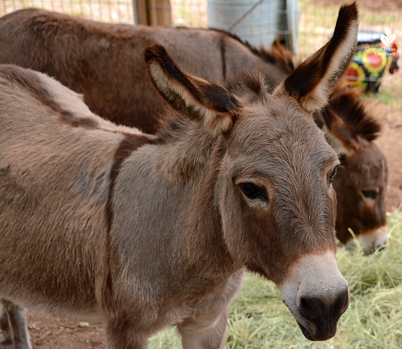 pet donkeys hobby farm Julie Nelson Kay Angermann