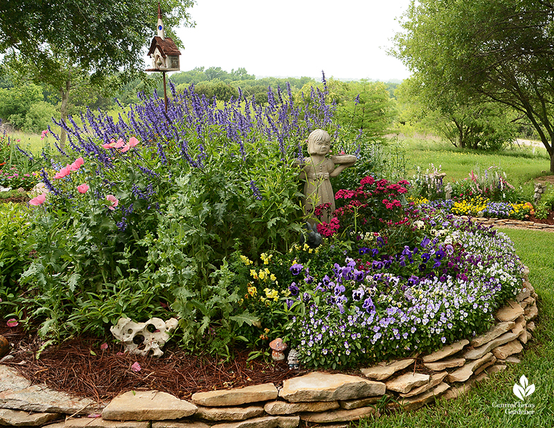 raised bed winter annuals larkspur pansy viola snapdragons Elizabeth DeMaria garden Central Texas Gardener