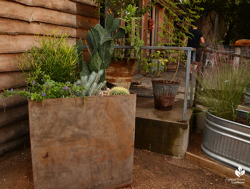 steel planter for drought tolerant plants Cosmic Coffee