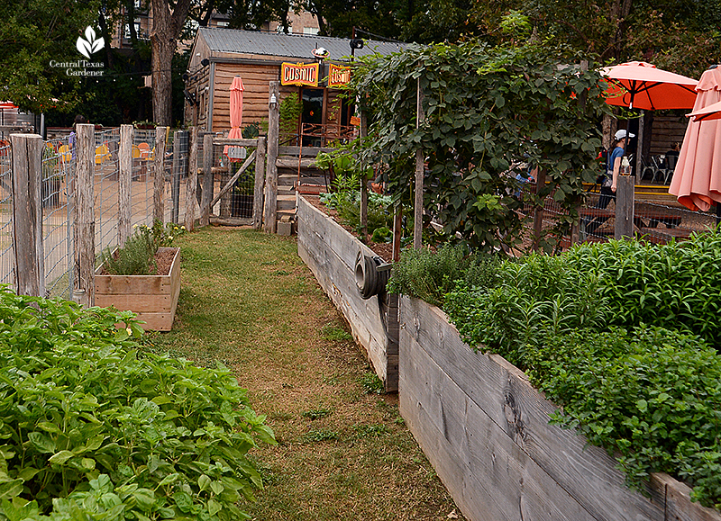 raised organic vegetable beds Cosmic Coffee + Beer Garden