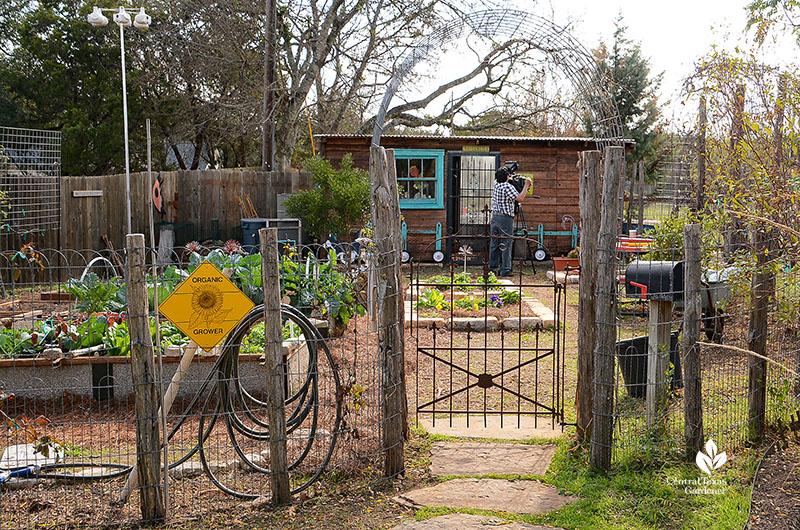 Vegetable garden fence old gate cattle panel trellis cute shed Dromgoole garden Central Texas Gardener