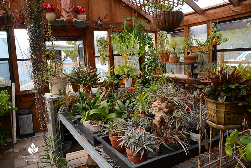 greenhouse charming design succulent plants tropicals Jane and John Dromgoole Central Texas Gardener