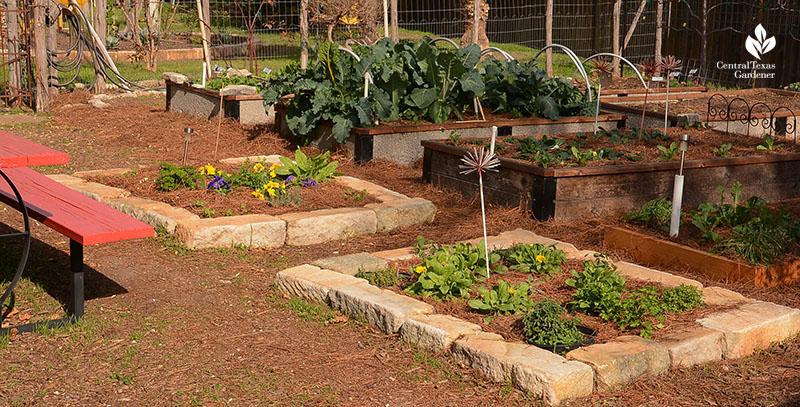 vegetable garden raised beds stone composite wood John and Jane Dromgoole Central Texas Gardener