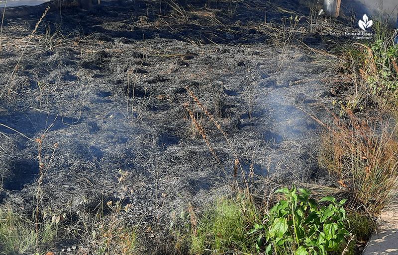 Half-Pint Prairie prescribed fire at end Central Texas Gardener