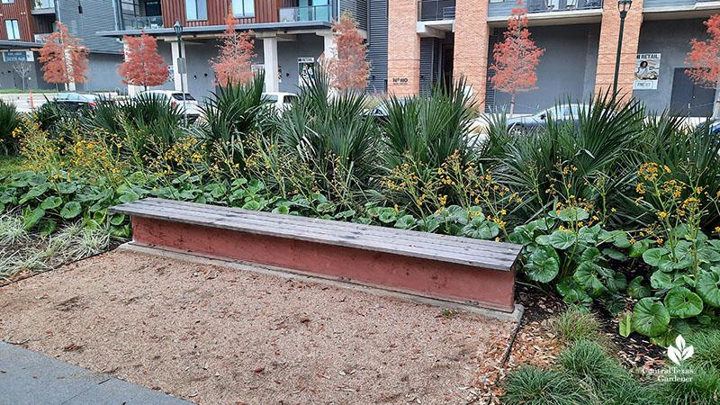 Gulf muhly grasses Jacob Fontaine Plaza ACC Highland Central Texas Gardener