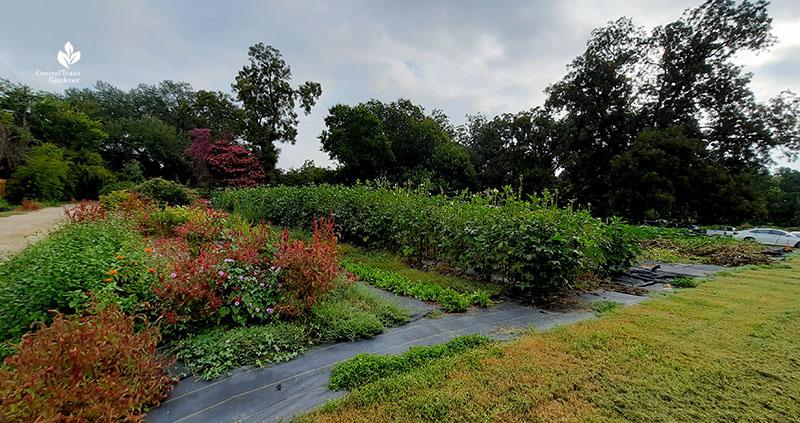 food and flower gardens Boggy Creek Farm Central Texas Gardener
