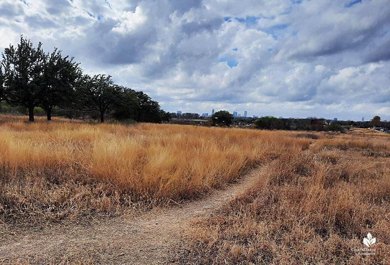 native grass trails Mueller Austin Central Texas Gardener