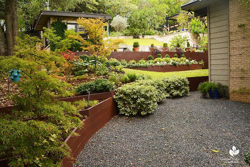 Shady garden Japanese maples ligularia steel plate bed retainers Harper Duhon garden