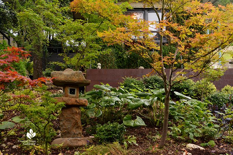 Japanese maples and ligularia garden sculpture shade garden Harper Duhon