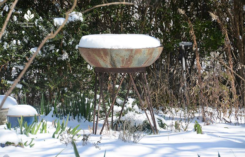 Birdbath snow cone top snow day Austin Central Texas Gardener