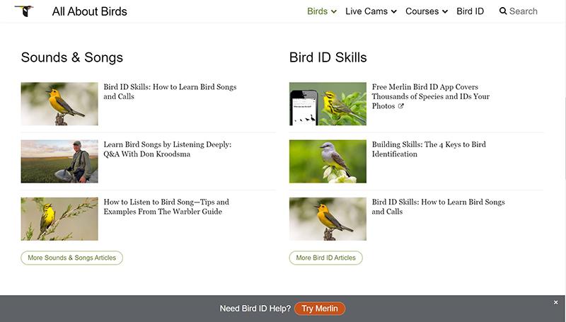 Cornell Lab bird identification resources Central Texas Gardener