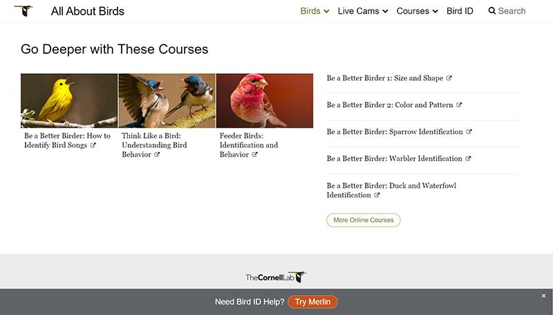 Cornell online courses about birds Central Texas Gardener