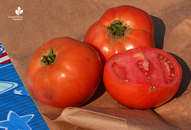 Ripe tomatoes Sunshine Community Gardens Central Texas Gardener