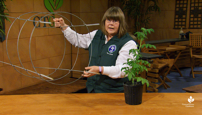 Sheryl Williams tomato growing tips Central Texas Gardener