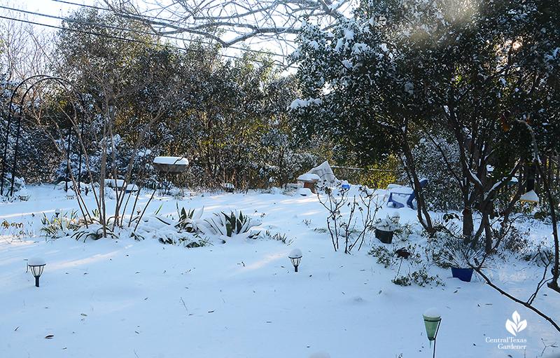 Snow at dawn Austin Texas backyard February 15 2021 Central Texas Gardener