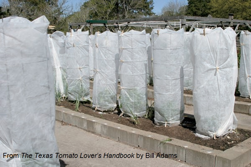 protective row cover for tomatoes Bill Adams The Texas Tomato Lovers Handbook