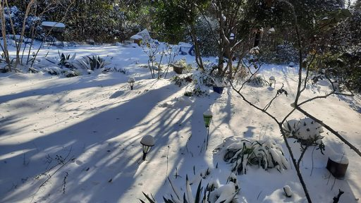 six inches snow Austin backyard February 2021 Central Texas Gardener