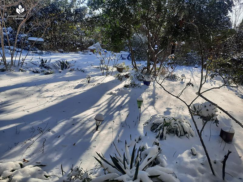 six inches snow Austin backyard February 2021 Central Texas Gardener