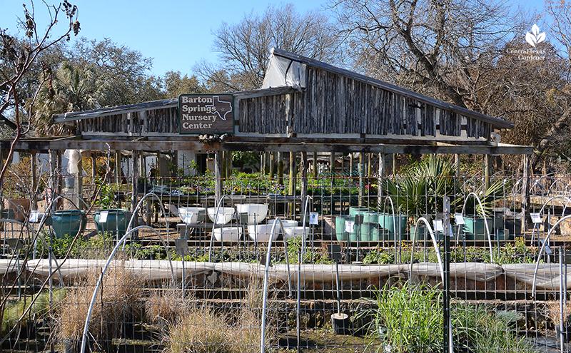 Barton Springs Nursery Austin Texas Central Texas Gardener
