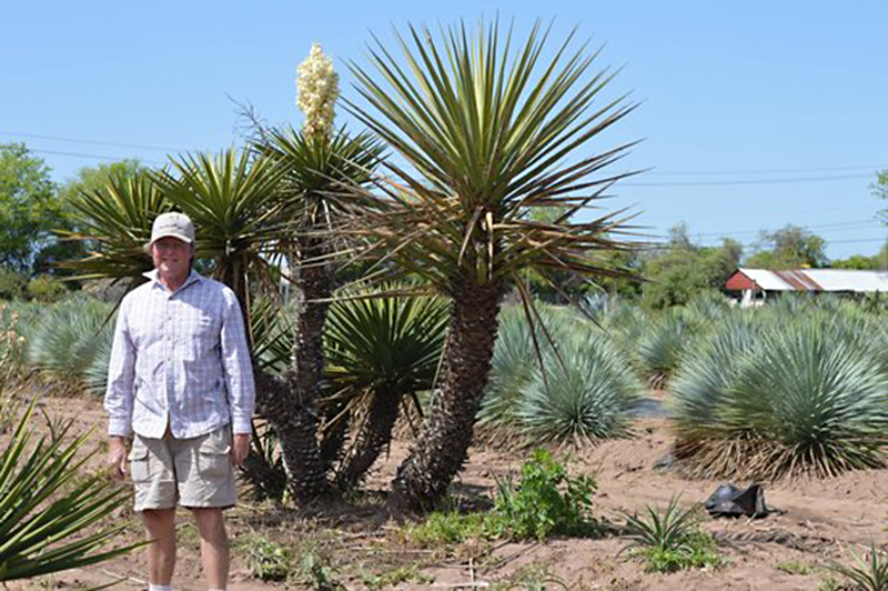 Conrad Bering with Yucca rostratas at Bering Growers @ 973 Farm Central Texas Gardener