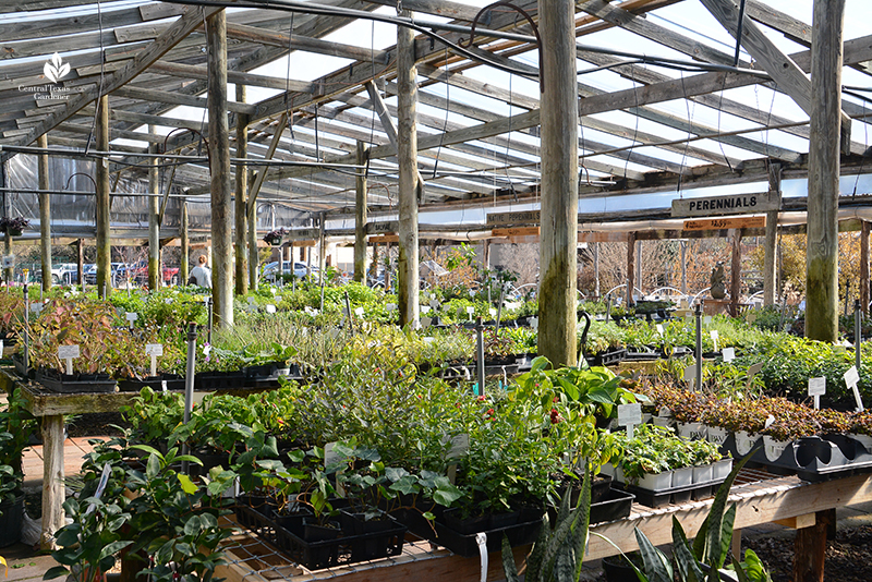flats of plants at Barton Springs Nursery