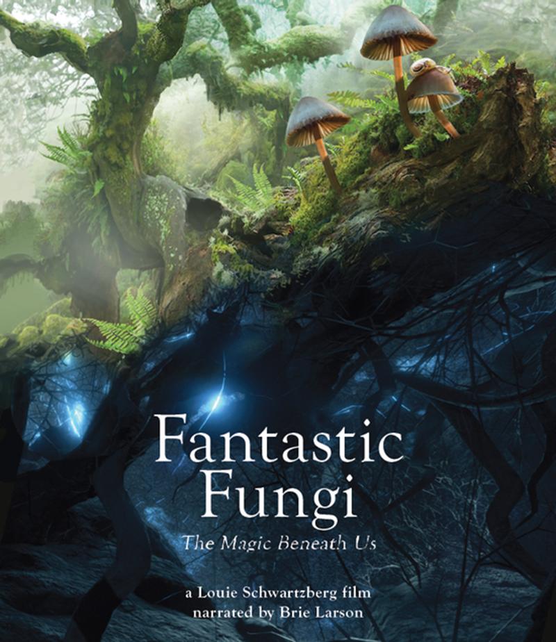 Fantasti Fungi
