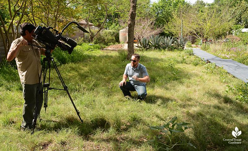 Native grass backyar pocket prairie John Hart Asher with Ed Fuentes of Central Texas Gardener