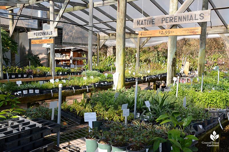 Native perennials and adapted perenniels Barton Springs Nursery Central Texas Gardener