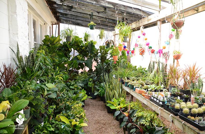houseplants and other tropicals Barton Springs Nursery Central Texas Gardener