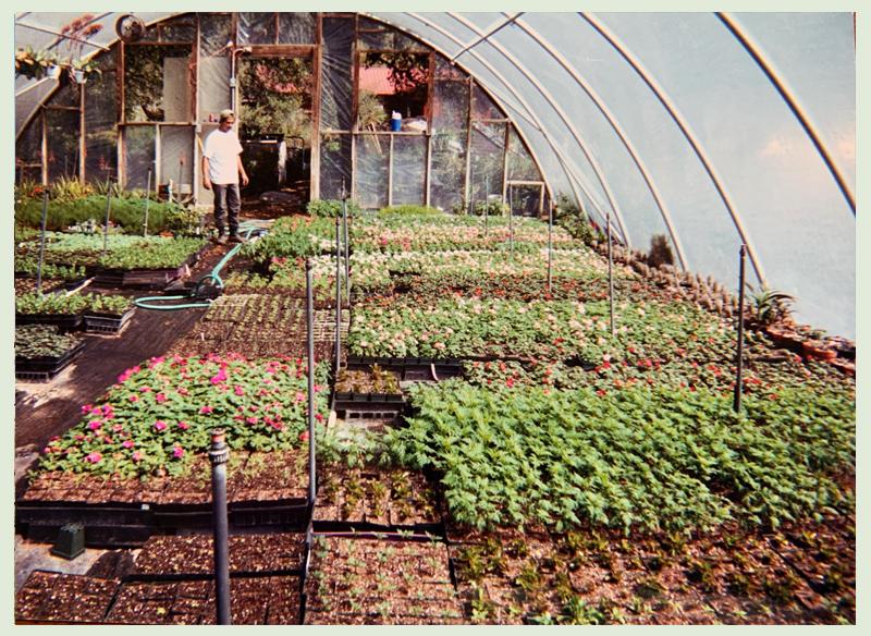 propagating plants Barton Springs Nursery photo by Bernardine and Conrad Bering