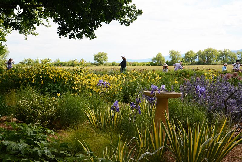 Colorado prairie garden Scripter gardeners Garden Bloggers Fling Central Texas Gardener