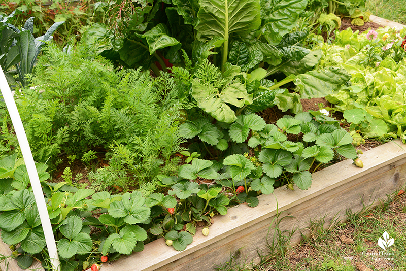 Strawberries and vegetables and flowers raised bed