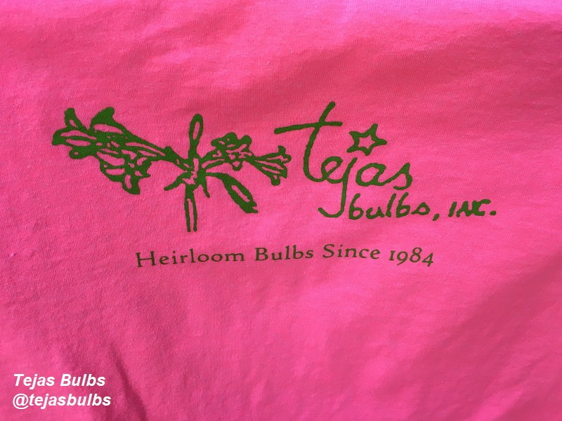 T-SHIRT TEJAS BULBS