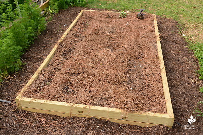 pine straw mulch in raised bed La Otra Flora Laura Brennand