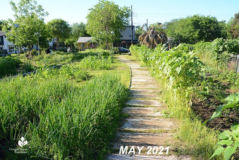 Este Garden main path to street May 2021